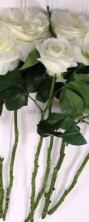 Розы: размножение черенками из букета