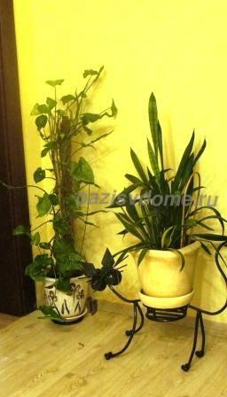 Выращивание сингониума в домашних условиях