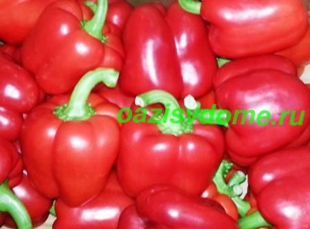 Посадка перцев на рассаду: когда и как сажать семена