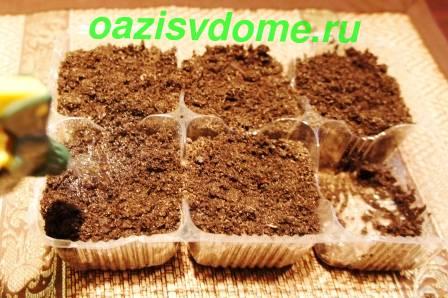 Увлажнение грунта для посадки рассады