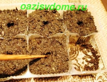 Подготовка грунта к посеву семян петунии