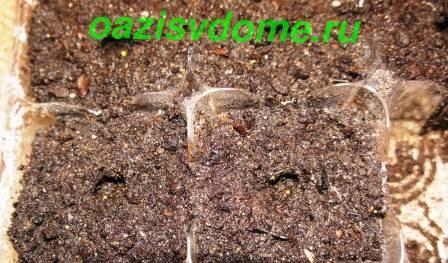 Посадка семян петунии