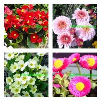 Какие цветы сажать на рассаду в феврале: фото, название, описание