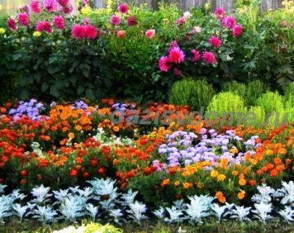 Фото цветов в саду