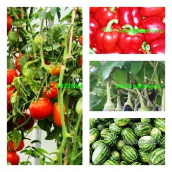 Урожай на огороде