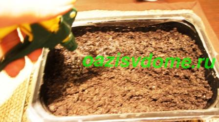 Увлажнение грунта с посевами земляники