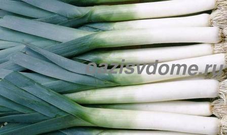 Урожай лука-порея