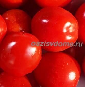 Выращенные на балконе помидоры