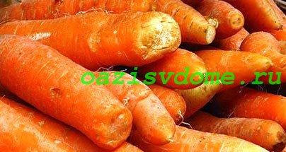 Выращивание моркови на грядке
