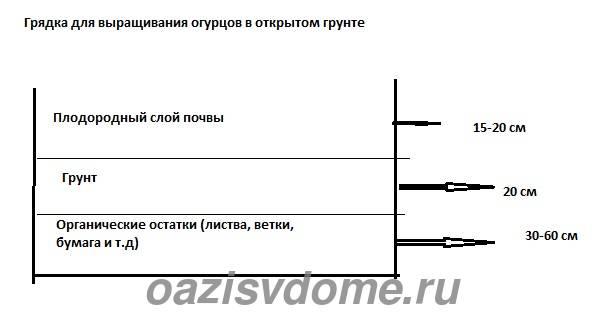 Схема грядки для посадки огурцов в грунт