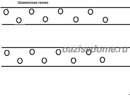 Шахматная схема посадки помидор