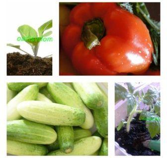 Высадка рассады в мае по Лунному календарю в 2018 году: когда сажать в теплицу помидоры, перцы, баклажаны, огурцы
