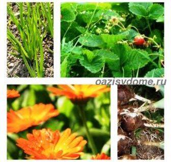 Лунный календарь огородника и садовода на июль 2018 года: что посадить в огороде, какие цветы можно посадить в июле