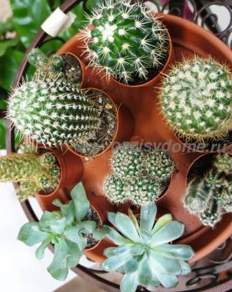 Кактусовый садик в домашних условиях