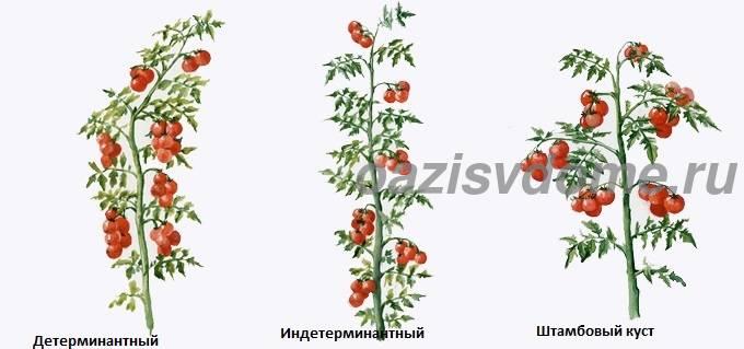 Формирование разных сортов томатов