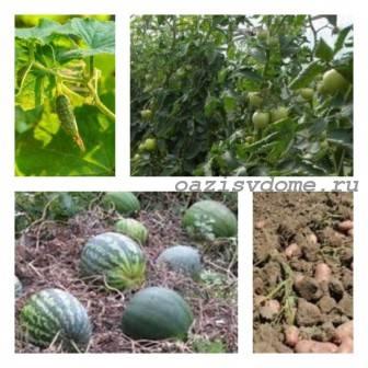 Эффективные способы ускорить созревание овощей
