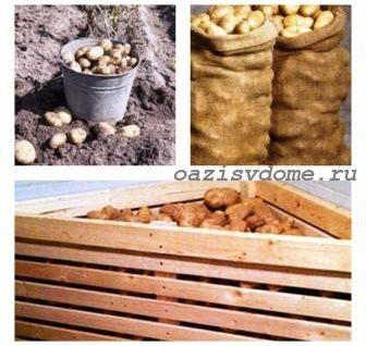 Как правильно хранить картофель: где и при какой температуре