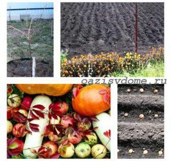 Лунный календарь садовода, цветоводы, огородника на октябрь 2018 года: таблицы