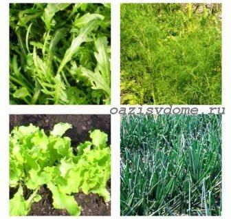 Какую зелень можно сажать под зиму: посадка зелени осенью в открытый грунт