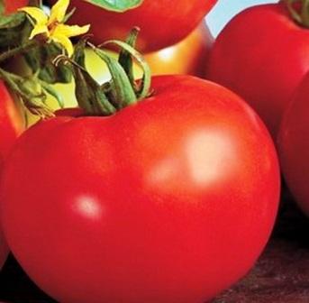 Сорт помидоров Алсу