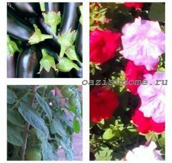 Благоприятные дни для посевов в январе 2019 года по Лунному календарю: когда сеять цветы и овощи на рассаду