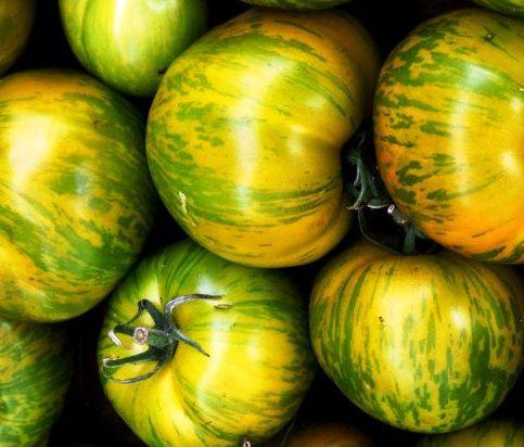 Сорт помидоров Сибирский малахит