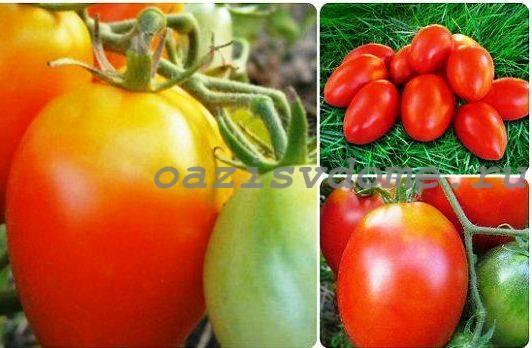 Фото томатов сорта Акварель
