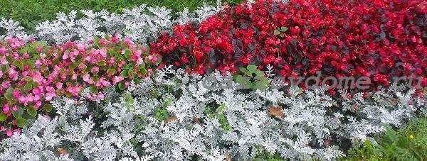 Когда в январе можно пересаживать комнатные цветы и сажать на рассаду садовые по Лунному календарю