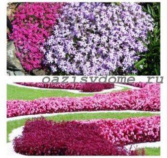 ТОП-8 цветущих все лето низкорослых многолетних цветов