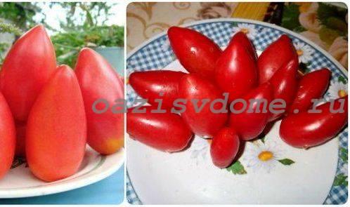 Фото томатов сорта Супермодель