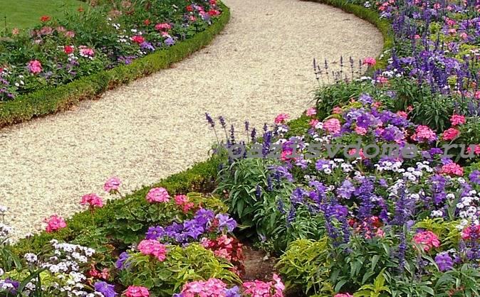 Герань в саду вдоль дорожек