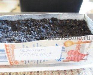 Почва для посева бархатцев