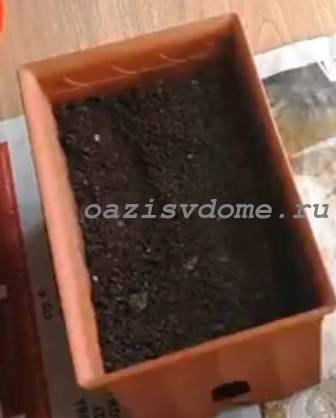 Ящик для посева сельдерея