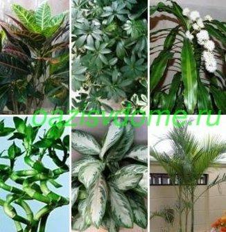 Декоративно-лиственные растения: фото и названия