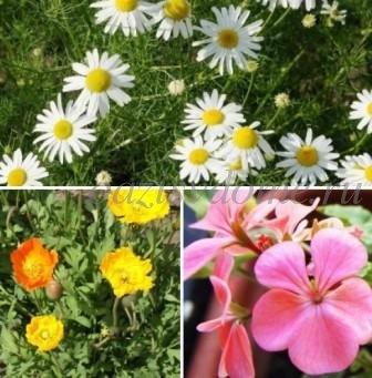 Полезные растения в саду