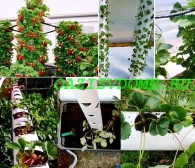 Выращивание клубники в трубах ПВХ горизонтально и вертикально