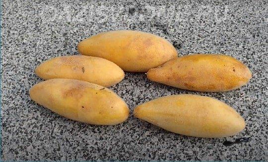Пассифлора банановидная