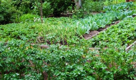 Лунный посевной календарь садовода и огородника на август месяц