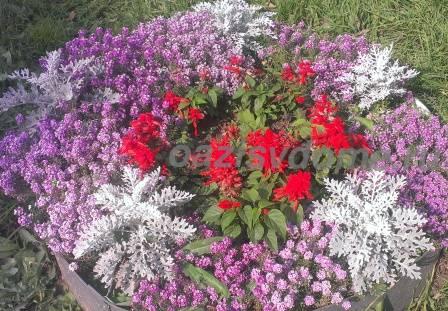 Посадка цветов на рассаду в январе, феврале, марте, апреле, мае: лунный календарь