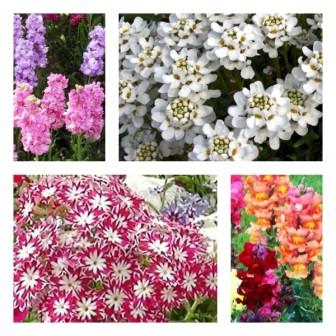 Какие цветы сеять на рассаду в марте: фото, название, описание
