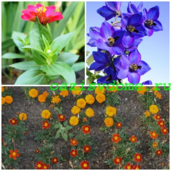 Какие цветы сеять на рассаду в апреле: фото, название, описание