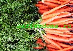 Овощ морковь