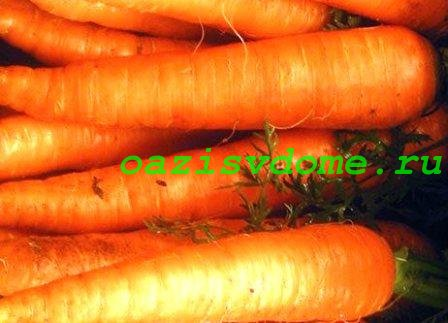 Растение морковь