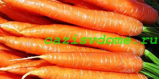 Корнеплоды моркови