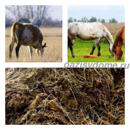 Конский и коровий навоз как удобрение: как применять, перерабатывать и хранить