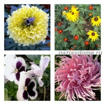 Какие цветы сеять в мае в грунт: название, фото, описание