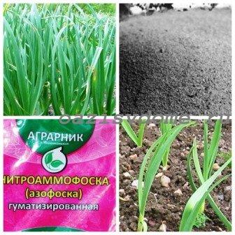 Подкормка чеснока весной и летом для достижения урожайности: чем подкормить озимый и яровой чеснок