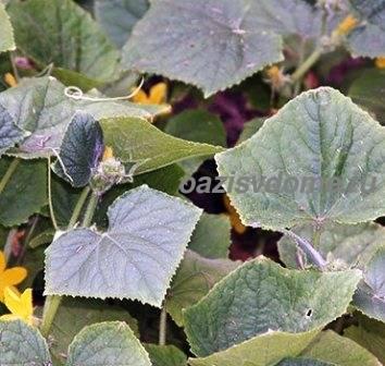 Правильный полив огурцов в теплице и грунте: когда лучше и как часто поливать огурцы от всходов до сбора урожая