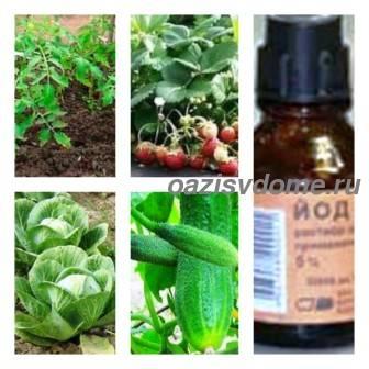 Полив и опрыскивание йодом растений от болезней, применение йода как удобрения в огороде