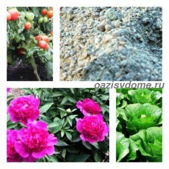 Применение древесной золы на огороде: подкормка золой огурцов, помидоров, клубники и других растений